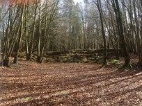 Emo Woods, Laois